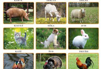 Pasėlių, gyvūnų ir augalų draudimo įmokos (gyvūnų draudimo įmokų kompensavimas) (2017 m.)